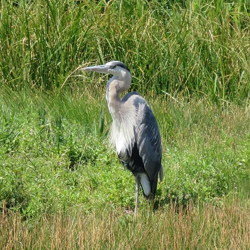 habitat-compensation-alberta