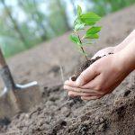 Habitat for Humanity – Phase 1 ESA Calgary
