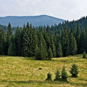 tree-health-assessment-management Alberta and British Columbia
